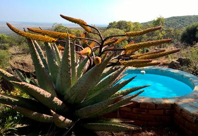 thumb_zuid-afrika-kiepersolkloof-private-nature-reserve